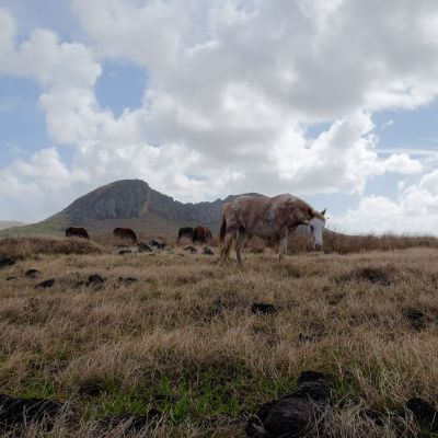 chili_ile_paque_easter_island_oulaoups170712_0065.jpg