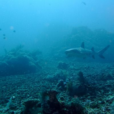 plongee_diving_komodo_oulaoups170502_0008.jpg
